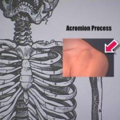 آناتومی برای هنرمندان - لری ویترز
