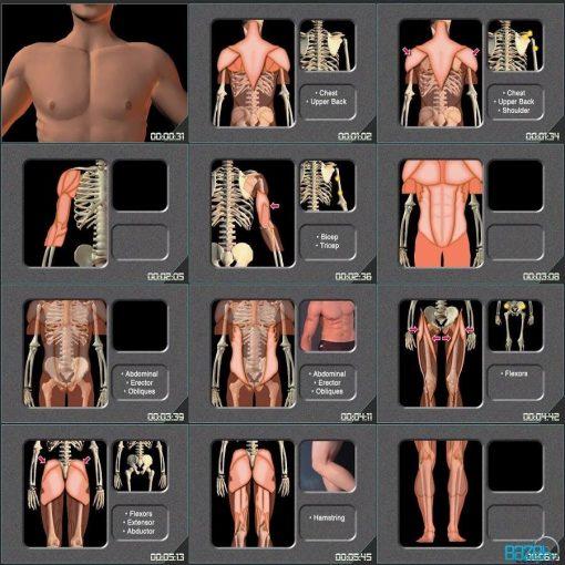 آموزش طراحی آناتومی برای هنرمندان - آناتومی حرکت بدن