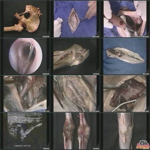 آموزش جراحی