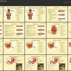 آموزش آناتومی بدن انسان