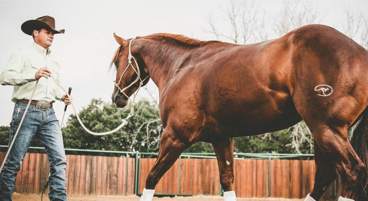 بدست آوردن احترام اسب