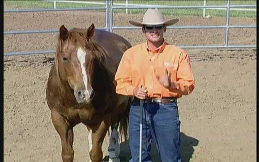 آموزش تربیت اسب