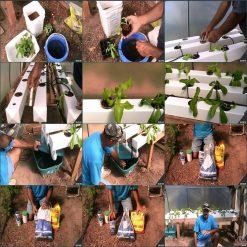 آموزش کشاورزی در خانه - کشاورزی مدرن