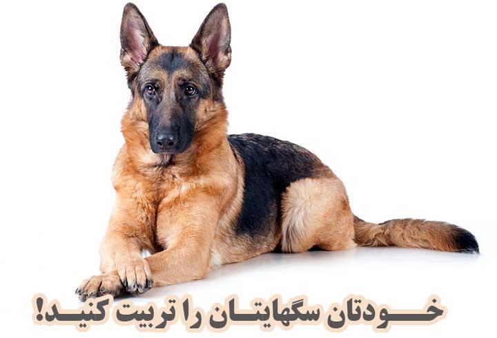 تربیت سگ نگهبان و سگ شکاری