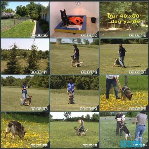 آموزش سگ نگهبان- سگ گارد