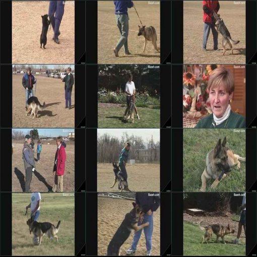 آموزش سگ خانگی