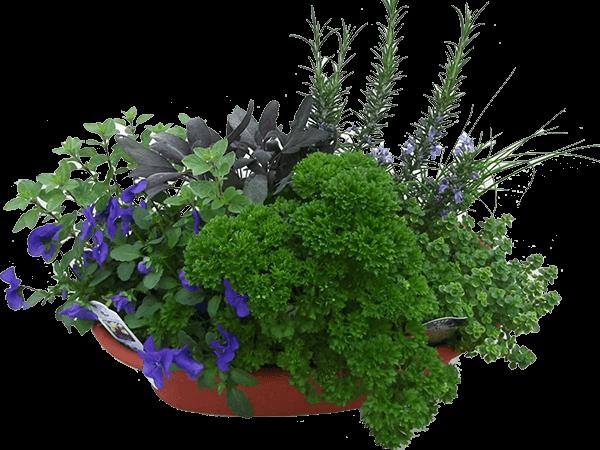 کشاورزی و باغبانی گلدانی
